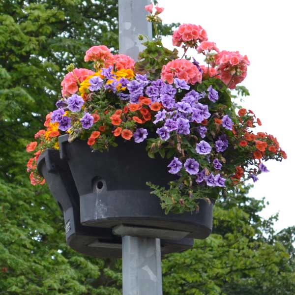 A planter in full bloom attached to a lamp post