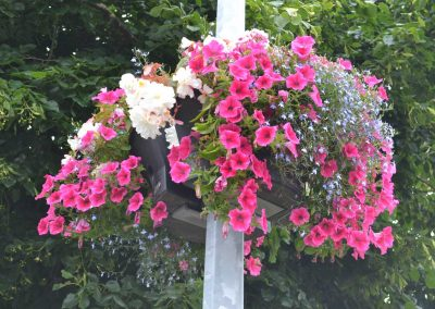 Planter in full bloom attached to a lamp post