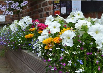 Flowers in full bloom outside the Winterton Council office
