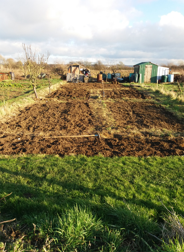 A view of Winterton Allotments
